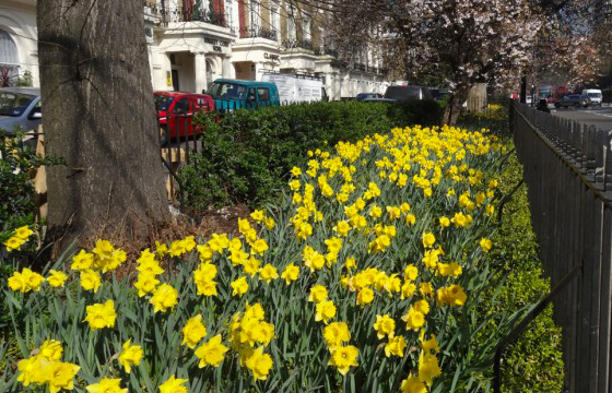 Make Paddington Bloom this June