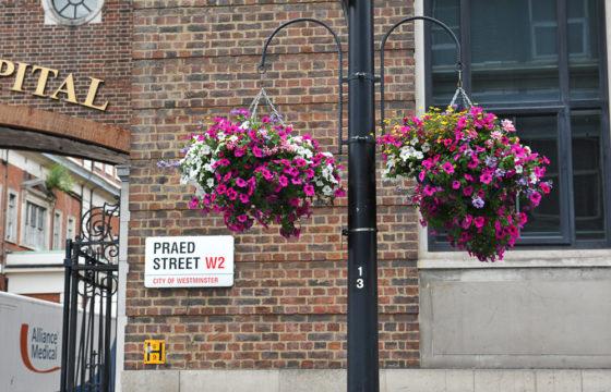 Pretty Petals Perk Up Paddington