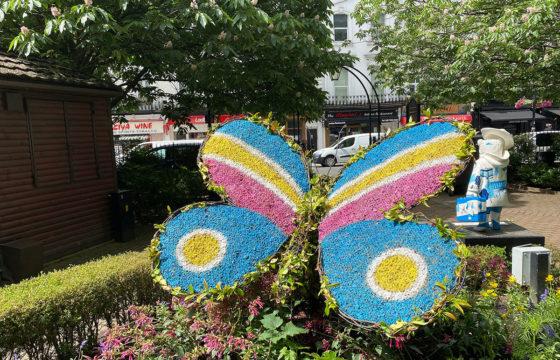 Butterflies Flutter by Norfolk Square Gardens